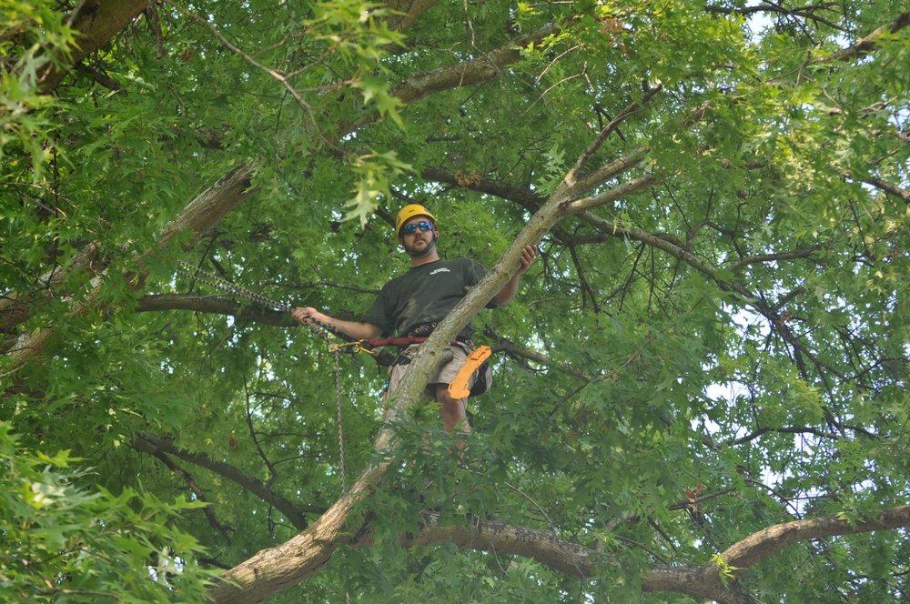 Bradley Tree Service: 2160 S Lee Hwy, Cleveland, TN