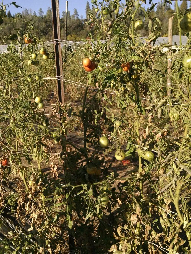 24Carrot Farm: 2731 Jacquier Rd, Placerville, CA