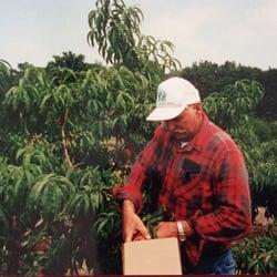 Photo Of Gasperu0027s Garden   Salem, OH, United States. Peaches!