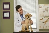 Morrisville Veterinary Hospital