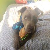 Spca Cincinnati 14 Reviews Animal Shelters 3949