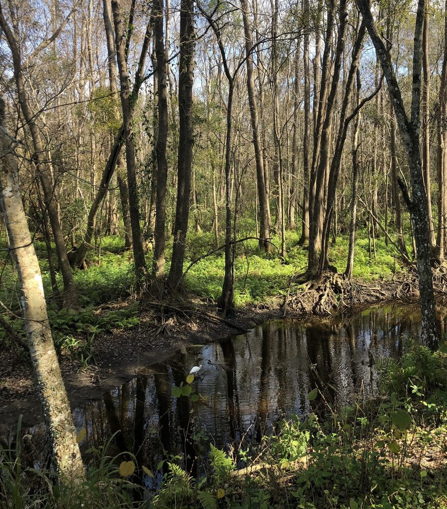 Saddle Creek Park: 3701-3899 Morgan Combee Rd, Lakeland, FL