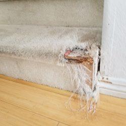 Ross Carpet Care 85 Photos Amp 20 Reviews Carpet