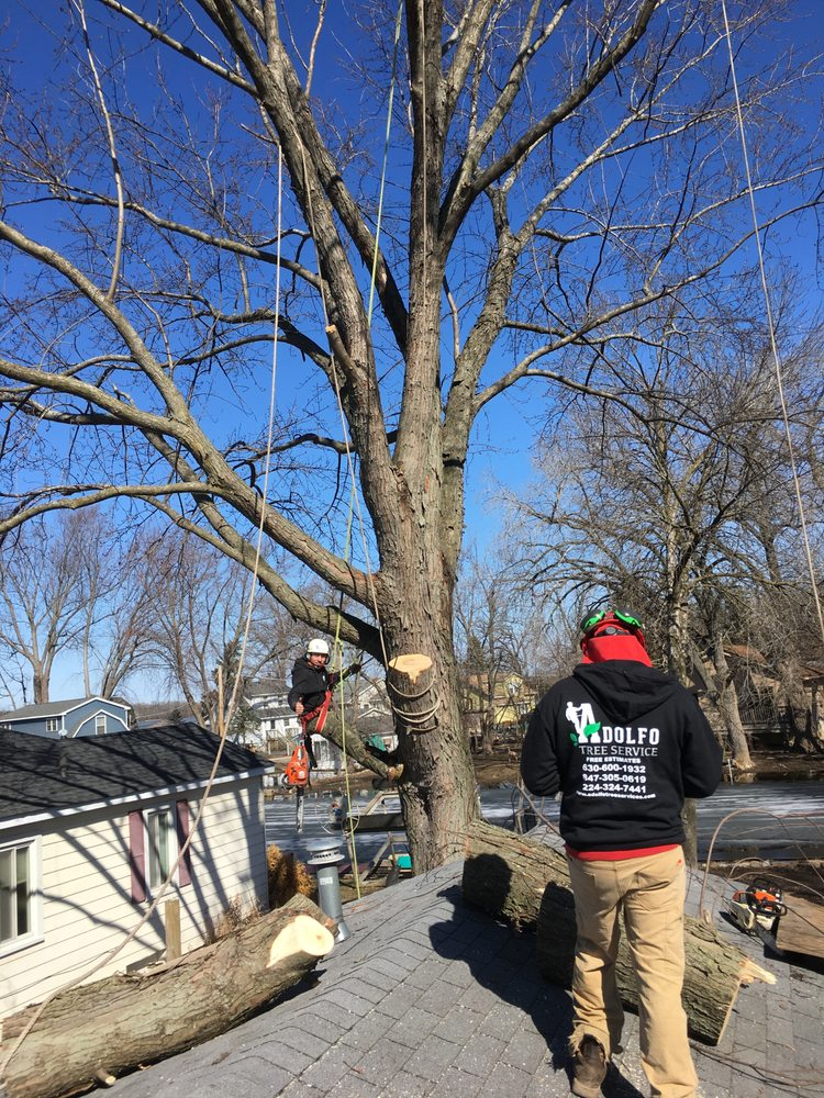 Adolfo Tree Services: 1426 Indian Ln, Carpentersville, IL