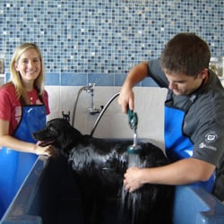 Lucky dog wash grooming 28 photos 13 reviews pet stores photo of lucky dog wash grooming college station tx united states solutioingenieria Choice Image