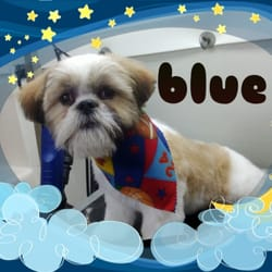 Mobile Dog Grooming Norco Ca