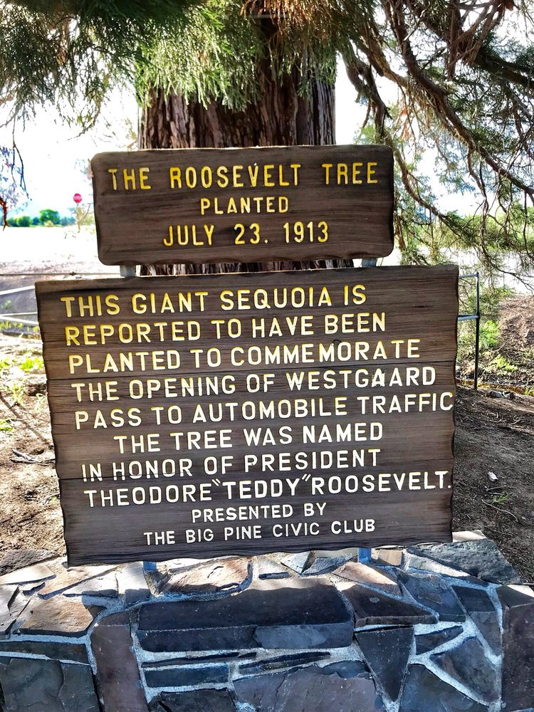 The Roosevelt Tree: Big Pine, CA