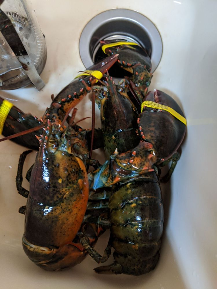 Bridgeport Seafood: 2117 Main Rd, Tiverton, RI