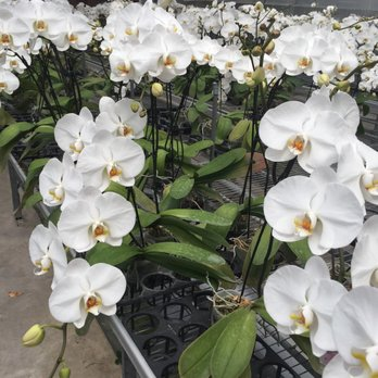 Photo Of Formosa Orchid Nursery Houston Tx United States