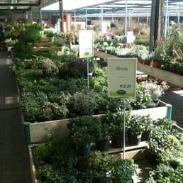 Viridea vivai e giardinaggio corso europa 323 rho for Viridea rho orari