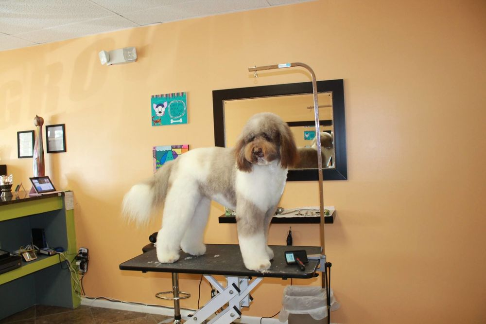 Dog City Grooming: 3951 N Federal Hwy, Pompano Beach, FL