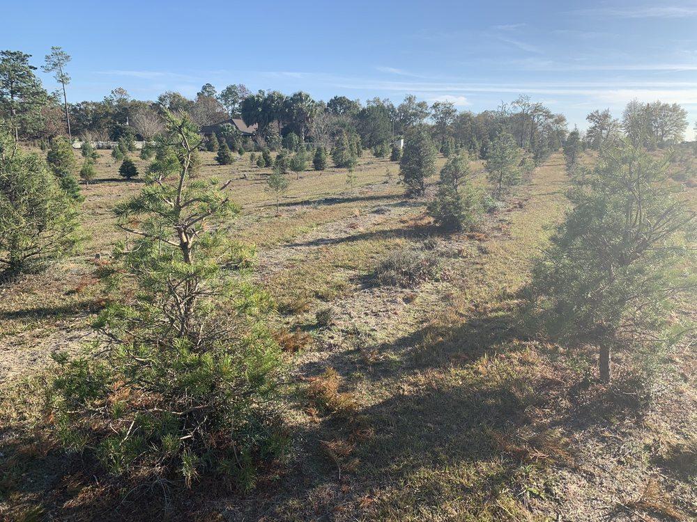 Whispering Pine Christmas Tree Farm: 1607 Penton Rd, Milton, FL