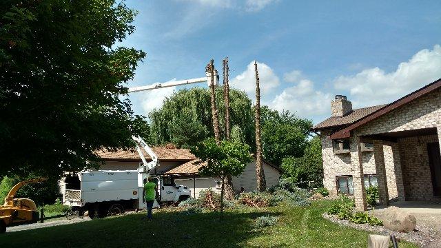 A Cut Above Tree Service: 204 N Main St, Creve Coeur, IL
