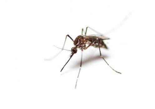 Get Lost Pest Control: 9032 Jordan Ln, Middleton, ID