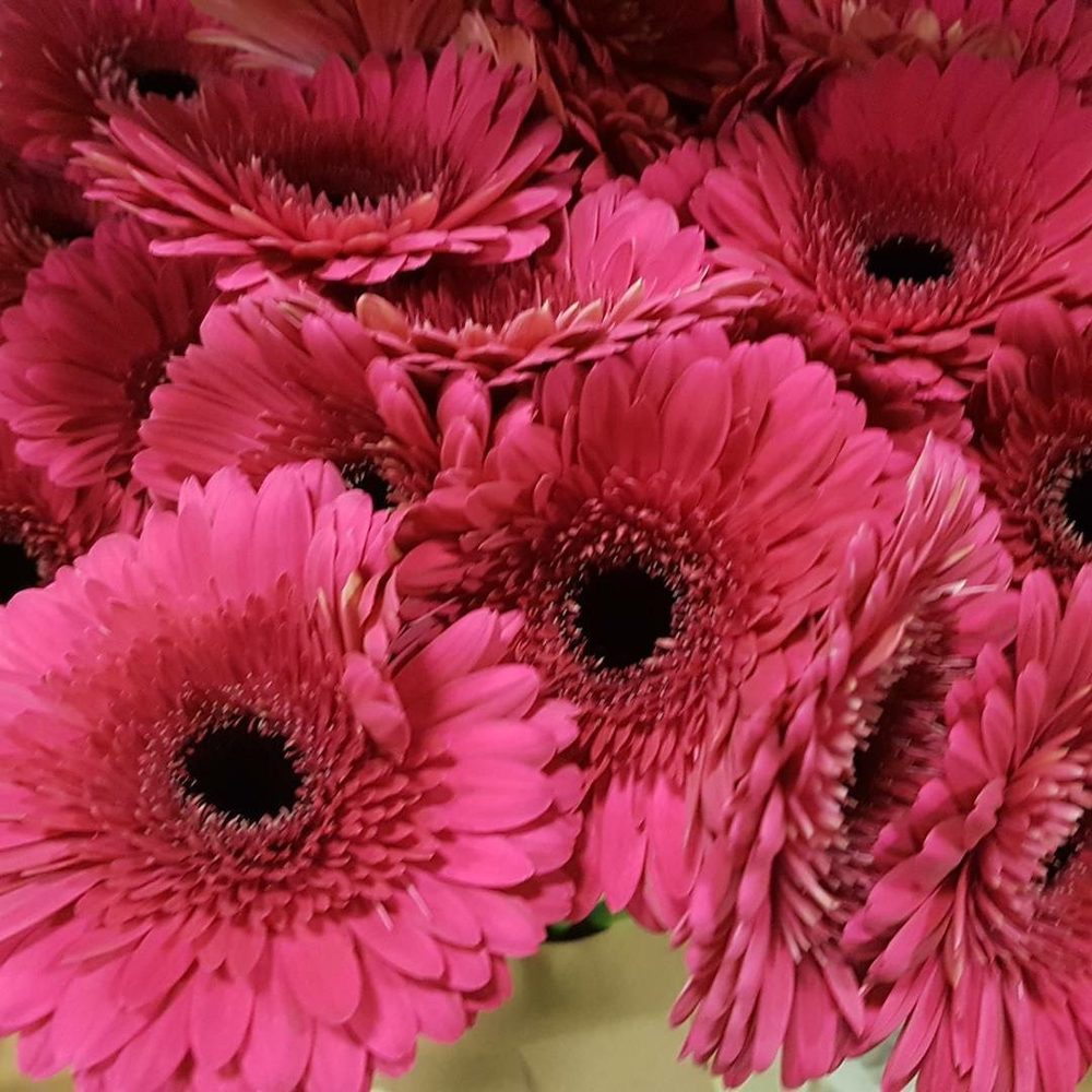 Hy-Vee Flowers by Rob