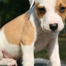 Sheboygan County Humane Society Animal Shelters 3107 N 20th St Sheboygan Wi Phone Number