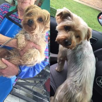 Dog Grooming Fairfield Ca