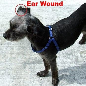 Petsmart Tulsa Dog Training