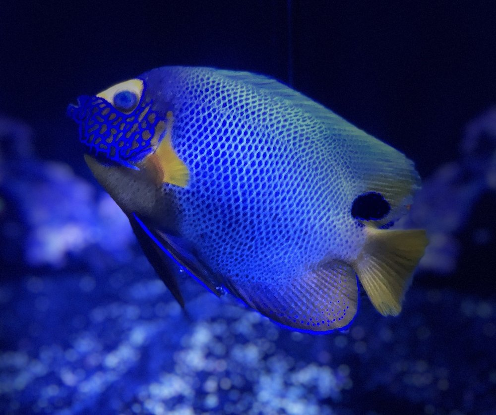 Discount Tropical Fish & Pond Supplies