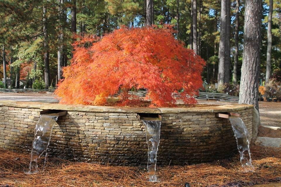 Photo Of Homewood Nursery Garden Center Raleigh Nc United States