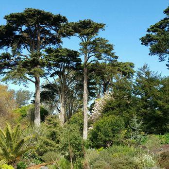 San Francisco Botanical Garden   1880 Photos U0026 490 Reviews   Botanical  Gardens   9th Ave U0026 Lincoln Way, San Francisco, CA   Phone Number   Yelp