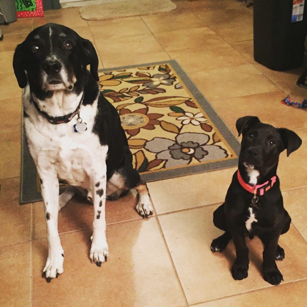 Ark O' Noah Pet Sitting: 620 N Circuit Dr, Beaumont, TX