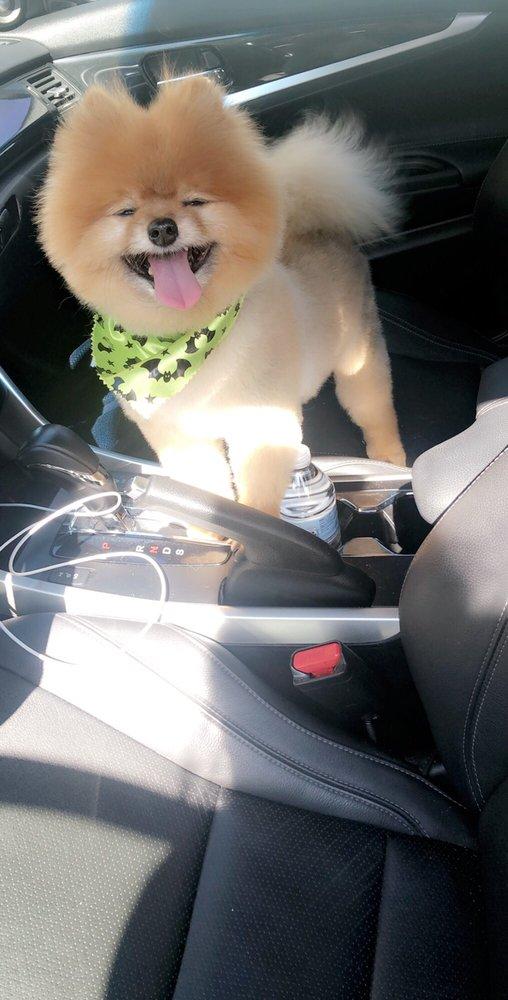 Grateful Dog Grooming: 104 College Dr, Orange Park, FL