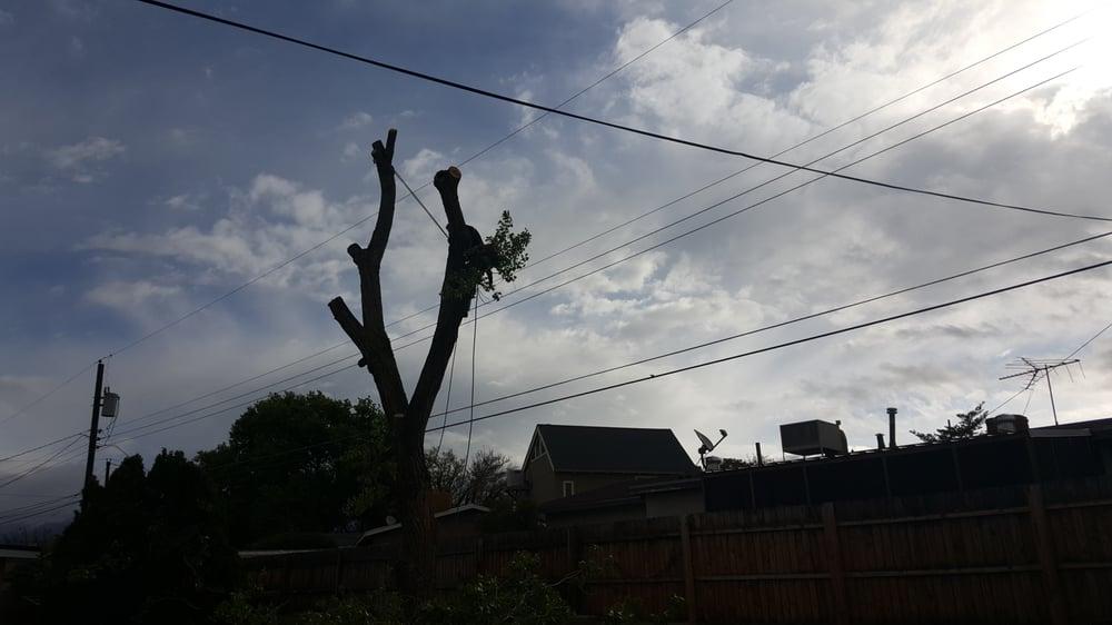 Terry's Tree Service: Los Lunas, NM