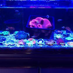 Photo Of Living Reef   Orlando, FL, United States