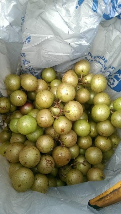 Hyde's Harvest: 214 Ardwall Rd, Toney, AL