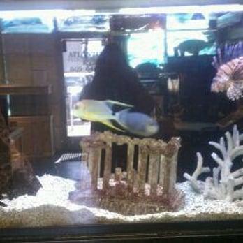 Atlantis tropical fish aquariums closed 11 reviews for Fish store las vegas