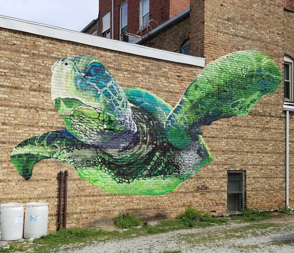 Sea Turtle: 118 W Washington St, Rensselaer, IN