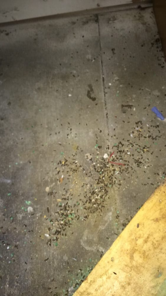 More mouse droppings under kitchen sink - Yelp