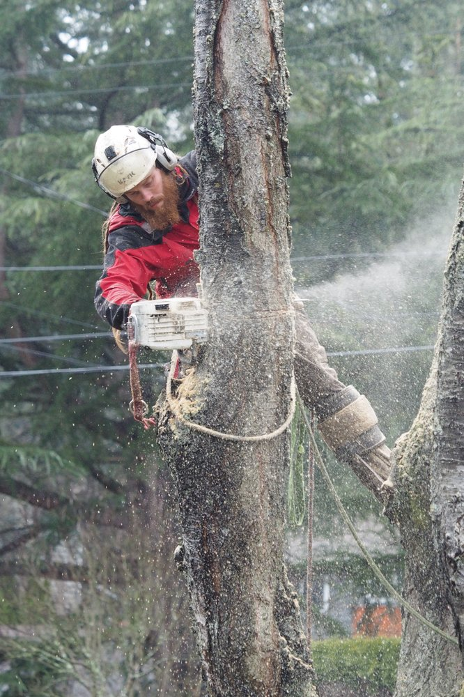 Taproot Tree Care