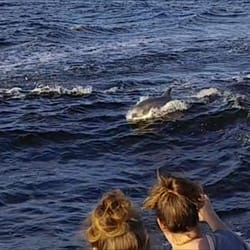 Photo Of Surf S Up Dolphin Cruises Orange Beach Al United States This