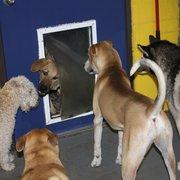 the big backyard 24 photos 26 reviews pet boarding