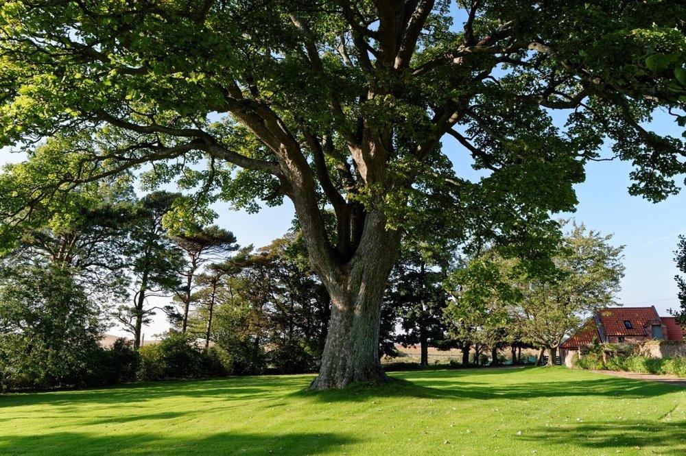 Economy Tree Care