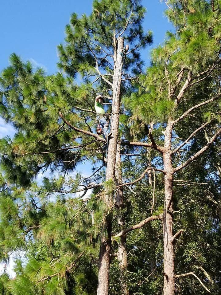 Crescent Tree Service: Theodore, AL