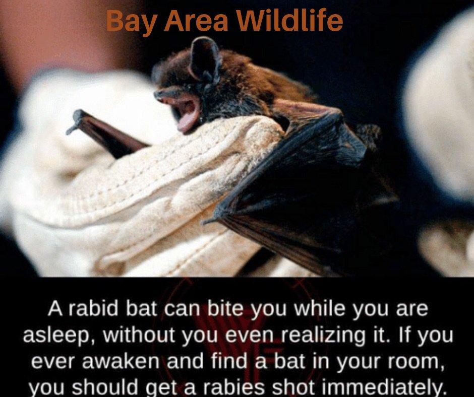 Bay Area Wildlife Solutions: 1147 S Salisbury Blvd, Salisbury, MD