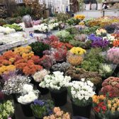 Los angeles flower district 754 photos 217 reviews florists photo of los angeles flower district los angeles ca united states mightylinksfo