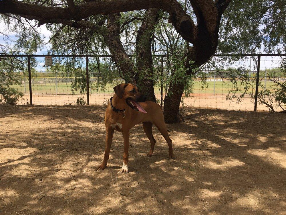 Smiling Dog Ranch