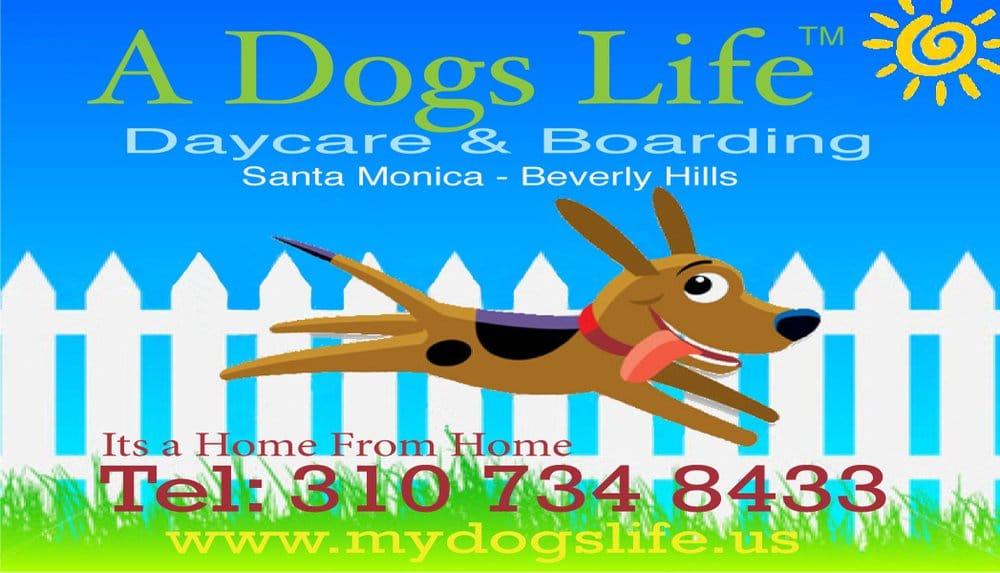 A dog s life dog daycare boarding santa for Dog boarding santa monica