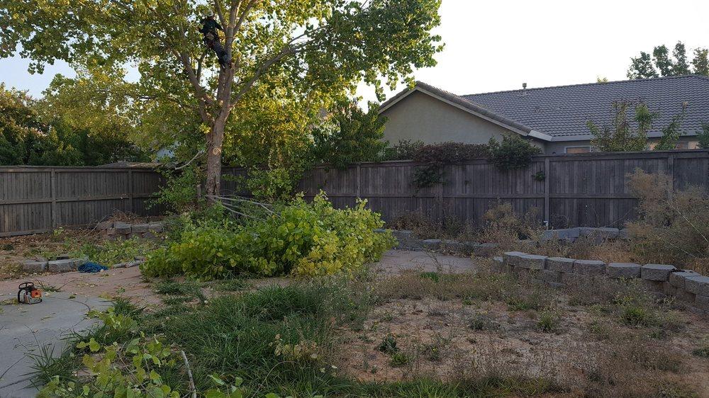 H G Tree Service: Sacramento, CA