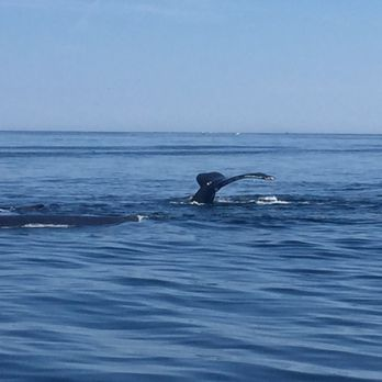 Captain john whale watching fishing tours 83 photos for Fishing charters plymouth ma