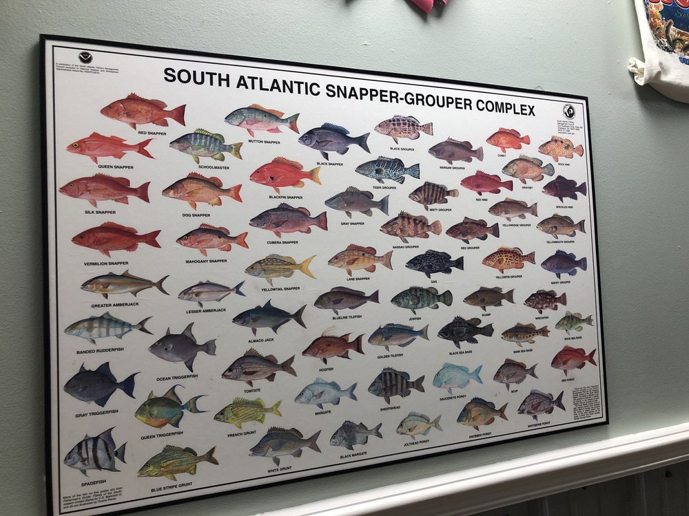 Maryland Blue Crabs! - Yelp