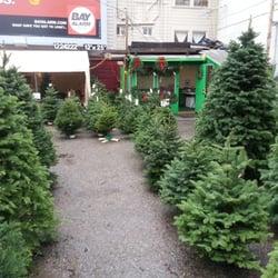 photo of sundance christmas tree nursery san francisco ca united states xmas - Christmas Tree Nursery