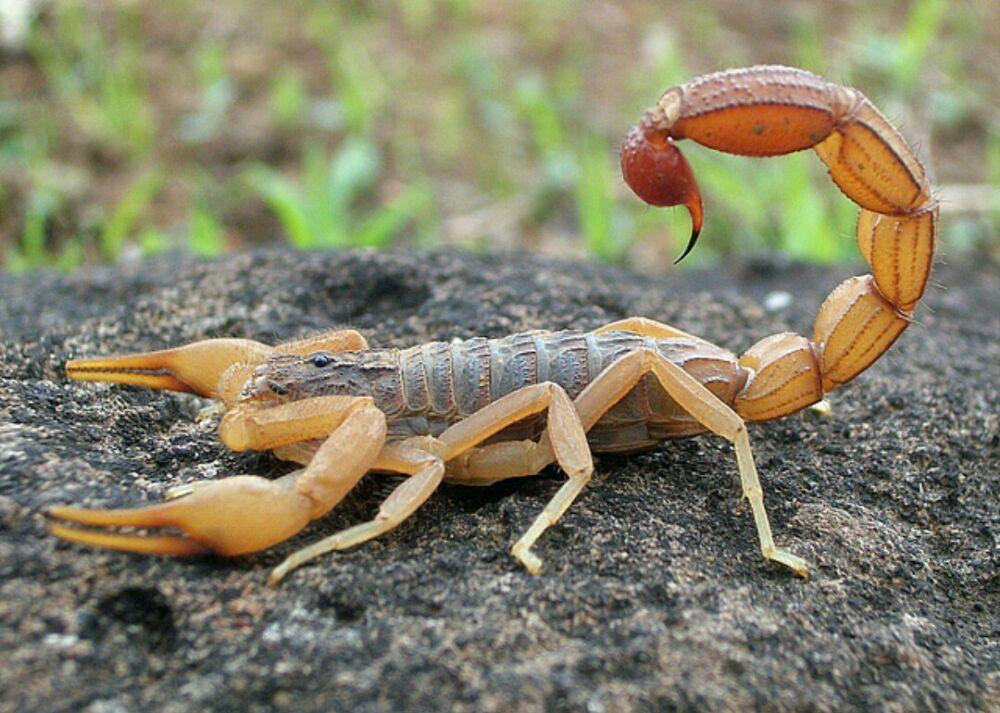 Superior Pest Control: Goodyear, AZ