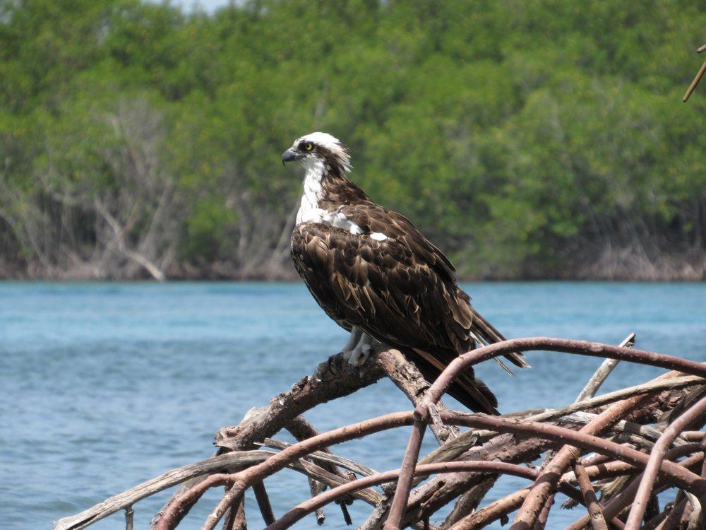 Motorized Kayak Adventures Gift Card - Fort Pierce, FL | Giftly