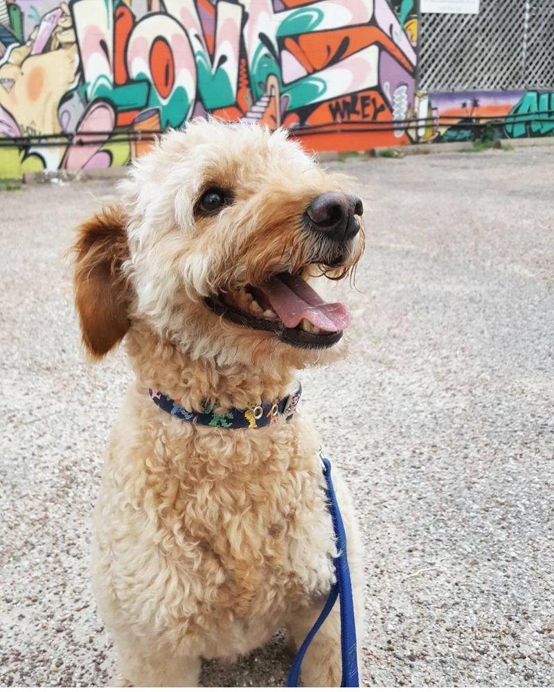 CANI Dog Walking Co: 3311 Yupon St, Houston, TX