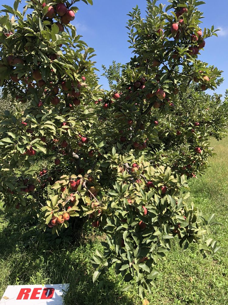 Dougherty Orchards: 1117 N Dougherty Rd, Cambridge City, IN